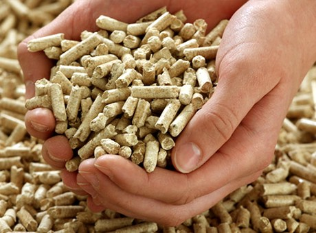 wood shavings pellet mill